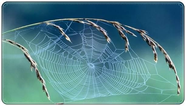 Удивительная красота осенней паутинки