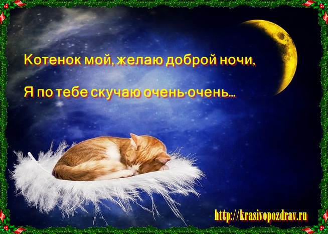 Пожелание ночи котикам