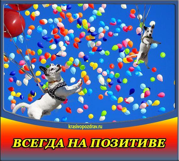 поздравление директору цирка с днем рождения современные тенденции