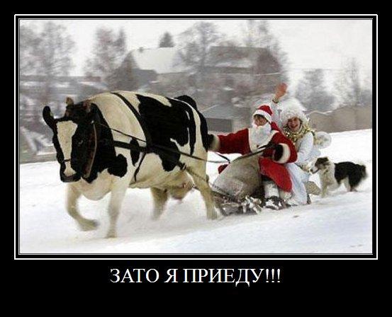 Короткие новогодние приколы