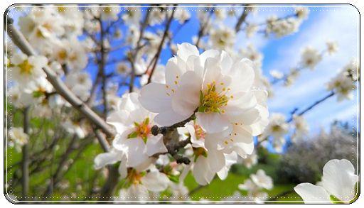 Пожелания с весной