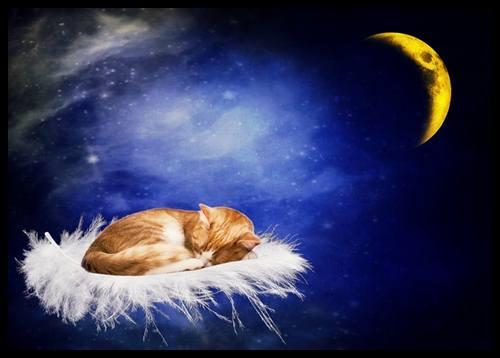 Красивые пожелания спокойной ночи в стихах короткие