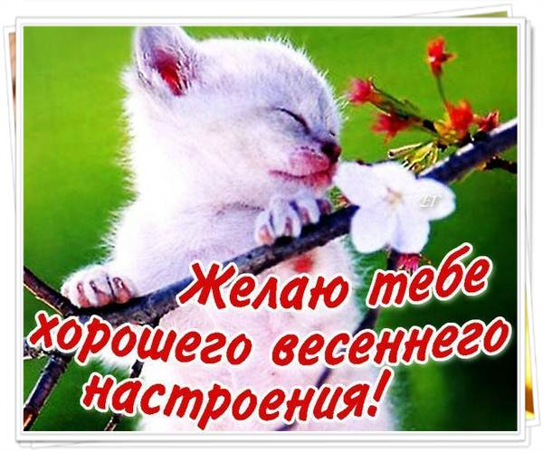 Желаю весеннего настроения поздравления