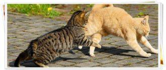 Смешные анекдоты про котов до слез