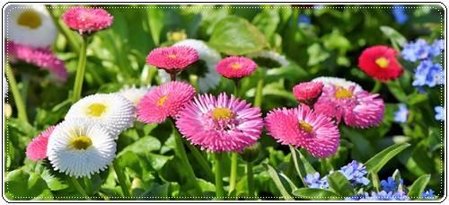 Стихи о цветах короткие красивые