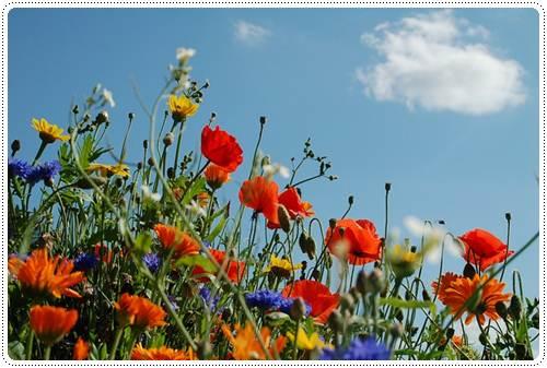 Поздравить с началом лета