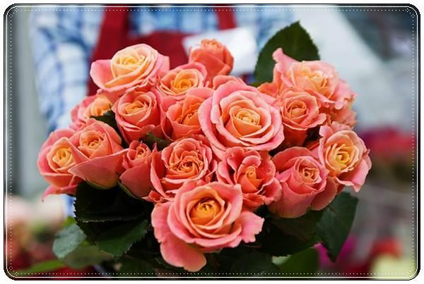 Изображение - Настю с днем рождения поздравления rose-3090840_640